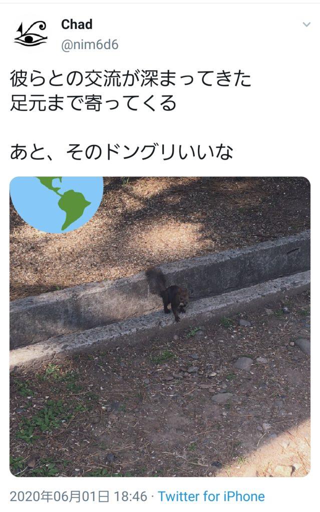 れうういさんの南米地震を予測するツイート